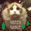 綠莊布偶貓舍 的 ROMA